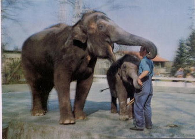 elefanten karten himmel online shop. Black Bedroom Furniture Sets. Home Design Ideas